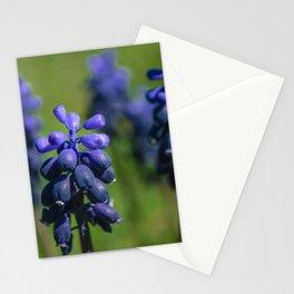 Grape hyacinth Stationery Cards