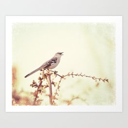 Mockingbird Bird Photography, Mocking Bird on Tree Branch, Nature Photograph Art Print