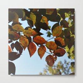 fall leaves 2 Metal Print