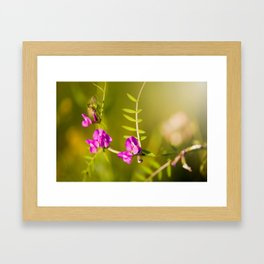 green branched tendrils of Vicia Framed Art Print