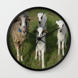 Ewe and Three Lambs Making Eye Contact Wall Clock