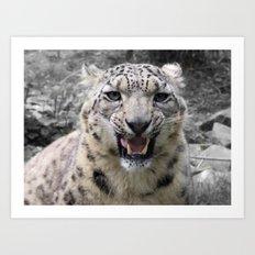 Angry snow leopard Art Print