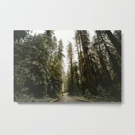 Redwood Forest Adventure III - Nature Photography Metal Print