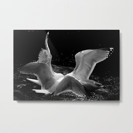 Fighting For A Meal Metal Print