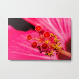 Pink Hibiscus Up Close Metal Print