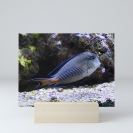 Sea World Colorful Fish Mini Art Print