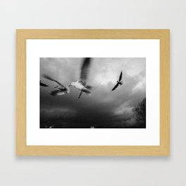 RiverGulls - 2 Framed Art Print