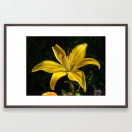 Yellow lily Framed Art Print