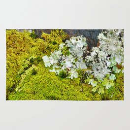 Tree Bark with Lichen#8 Rug