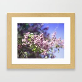 Flowers Lilac Branch Close-up Outdoors Sunny Day Framed Art Print