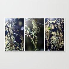 Lichen - Triptych Canvas Print