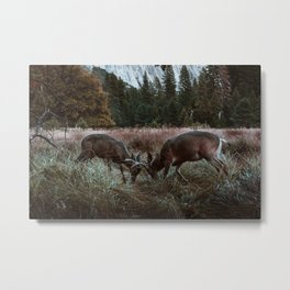 Yosemite Bucks Locking Horns Metal Print