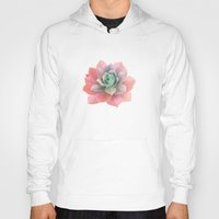 succulents Hoodies featuring succulents by NuroNuro