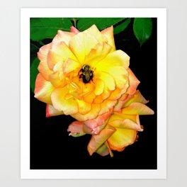 Bee on Yellow Roses Art Print