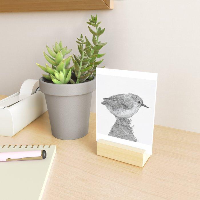 Rifleman - New Zealand Native Bird Mini Art Print
