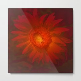 Fiery Sunflower.... Metal Print