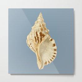 Sea Shell Two Metal Print