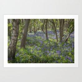 Seabrook Bluebells Art Print