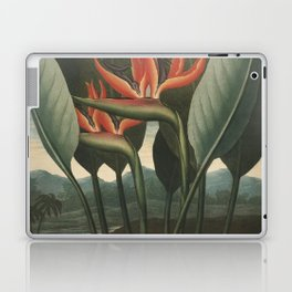 Henderson, Peter C. (d.1829) - The Temple of Flora 1807 - The Queen (Bird of Paradise Flower) Laptop & iPad Skin