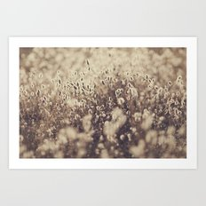 Field So Bright Art Print