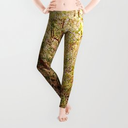 Forest is waking up Leggings