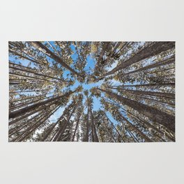 Yellowstone National Park - Lodgepole Forest Rug