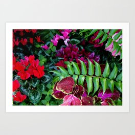 Red Pink Cyclamen and Coleus Flowers Art Print
