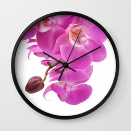 Pink orchid flowers Wall Clock