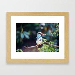 Untitled (Bird) Framed Art Print