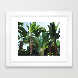 Tropical Forest / Nature Photography Framed Art Print