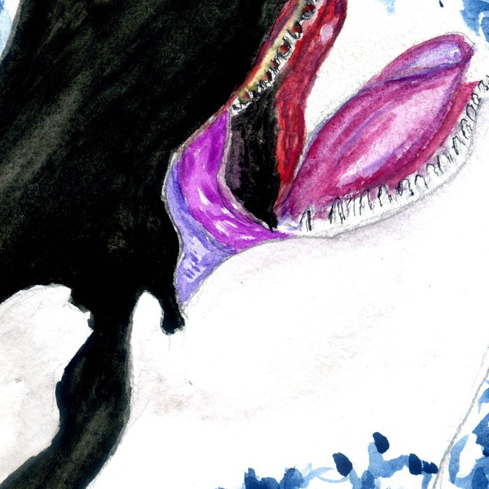 Orca illustration Leggings