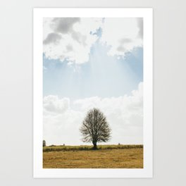 The solitary Burmese tree Art Print