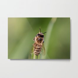 Hover Fly Bee Metal Print