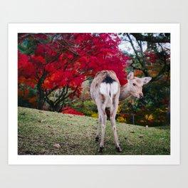 Deer in Nara Park Art Print