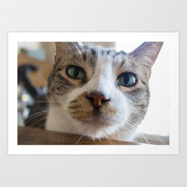 Kiko the Cat Art Print