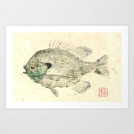 Bluegill 5 Art Print