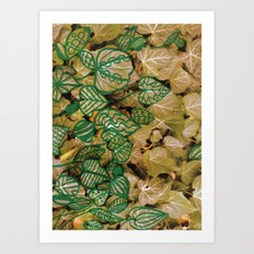 leaves evolved 3 Art Print