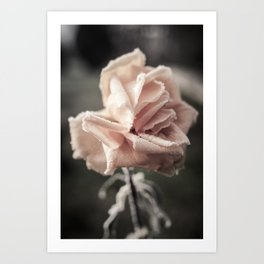 Roses in the Winter Art Print