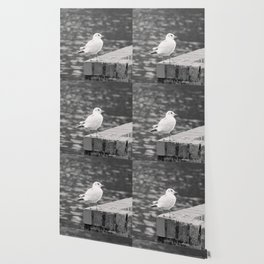 Gull Photograph Wallpaper