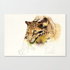 Clouded Panther Canvas Print