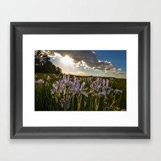 Mountain Flower Brilliance Framed Art Print