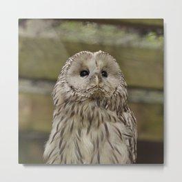 Owl_20180203_by_JAMFoto Metal Print