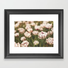 Candy Tulips Framed Art Print