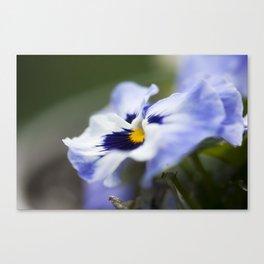 Blue Pansy II Canvas Print