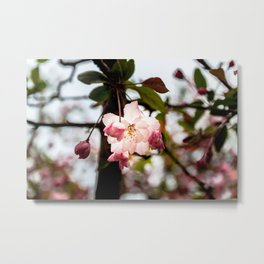 My Fair Blossom Metal Print