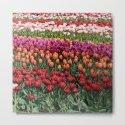 Colorful Tulips by julianarw