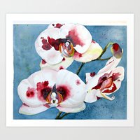 orchid Art Prints featuring orchid by Natalie