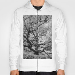 Tree - Landscape and Nature Photography Hoody