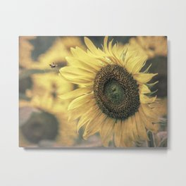 Sunflower Field Bumble Bee A417 Metal Print