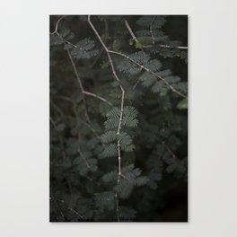 Plant - Fern 3 Canvas Print